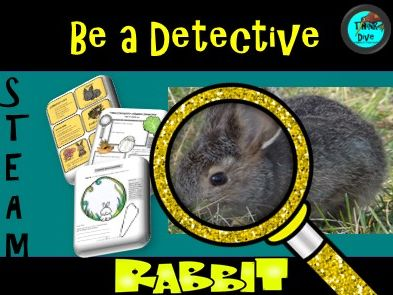 Rabbit Life Cycle Project Based Learning Ks1 Ngss Steam Biomimicry Teaching Resources