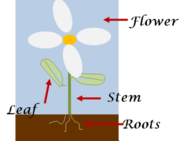 Key Stage 1/2 Basic Botany - Plant Science