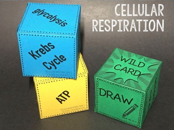 Cellular Respiration Review Qubes
