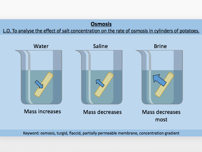 Osmosis / Concentration Gradient / Diffusion