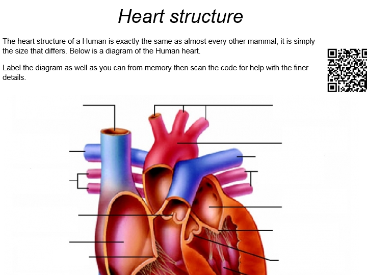 AQA A Level Biology: Heart and heart disease