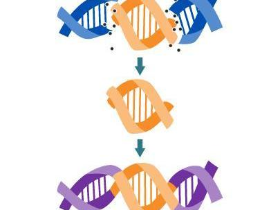 Selective Breeding & Genetic Engineering in one lesson!!!!