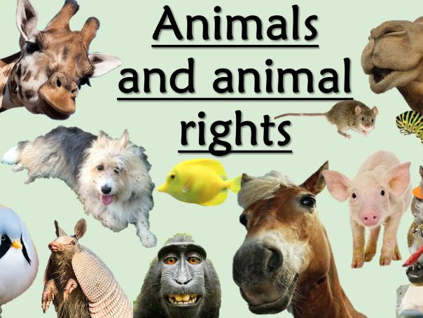 RE GCSE AQA Religion and Life - L3 Animals and Animal Rights