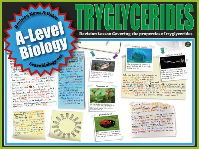 Lipids: The Properties of Triglycerides - A-Level Biology Revision Notes, Video & Worksheet.