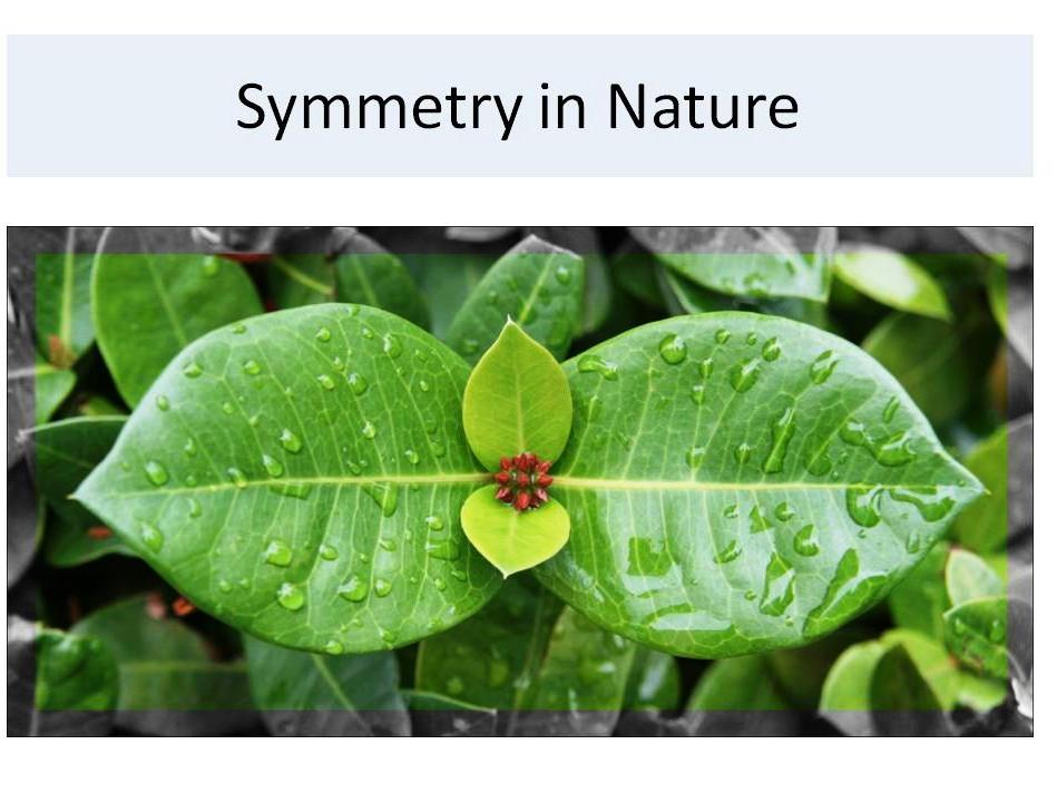 Geometry-Symmetry in the real world: in people-animals-nature Smart Bd, PowerPoint, PDF