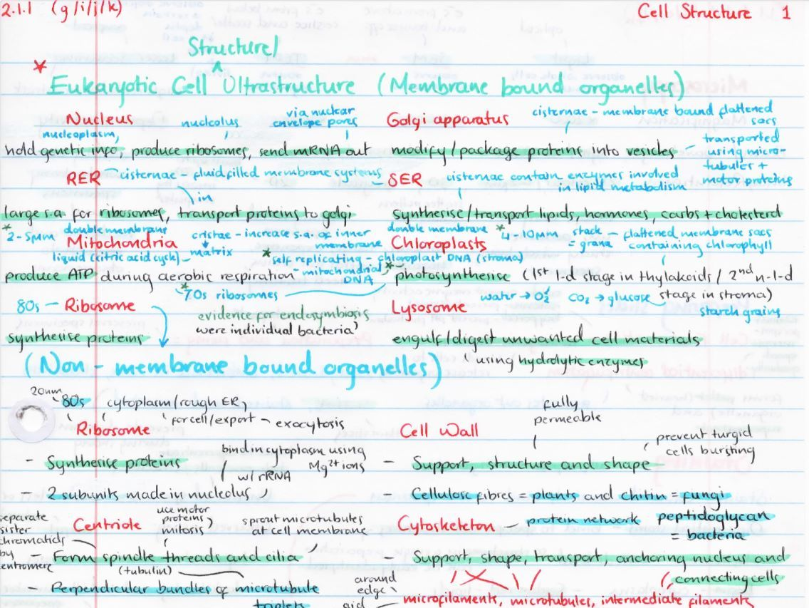 OCR A Level Biology Year 1/AS Revision Posters