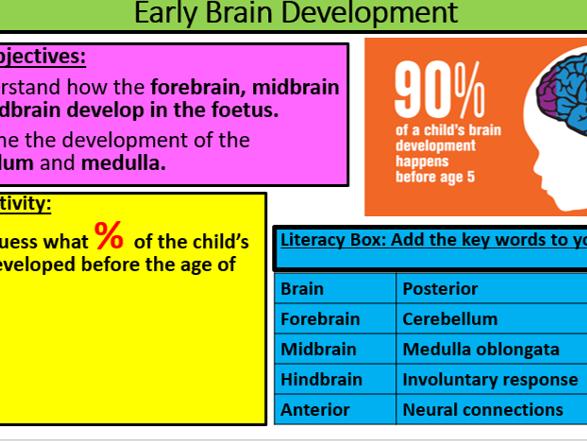 GCSE Edexcel Psychology (9-1): Topic 1: Development, Lesson 2: Early Brain development