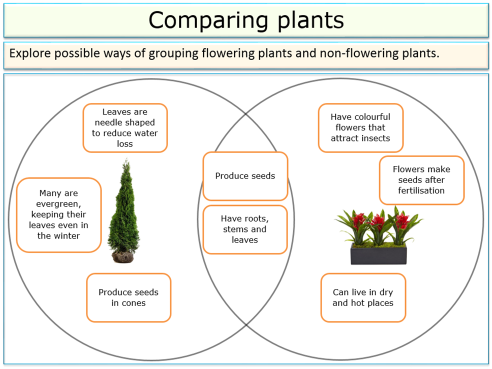 Living things and their habitats - Classification (grouping of plants) for KS2 and KS3 science
