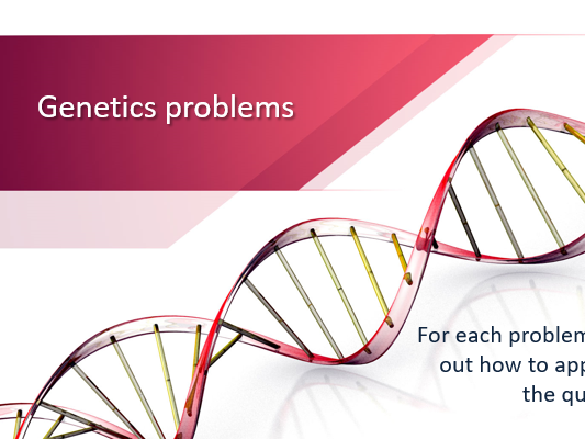 Genetics Problems 2 PowerPoint Activity