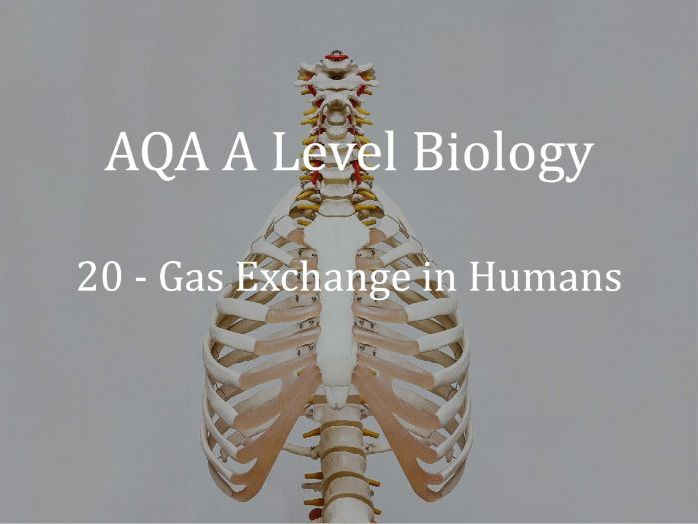 AQA A Level Biology Lecture 20 - Gas Exchange in Humans