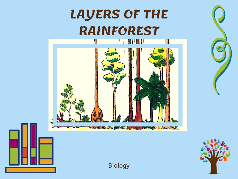 Layers of the Rainforest Nomenclature Cards