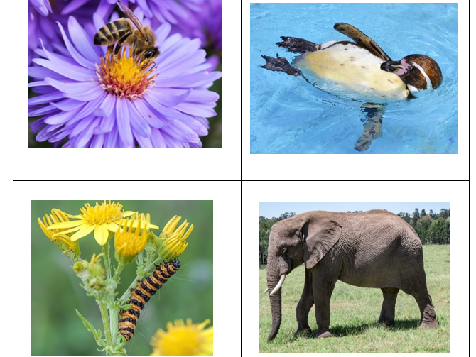 Animal Adjectives Picture Card Activity