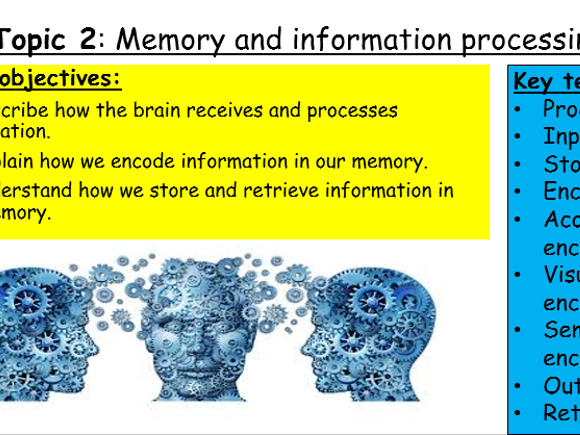 GCSE Edexcel Psychology (9-1): Topic 2, lesson 1 - Introduction to memory