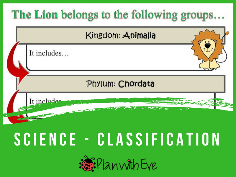 Classification of Living Things / Groups / Taxonomy - The Lion! From Kingdom to Species!