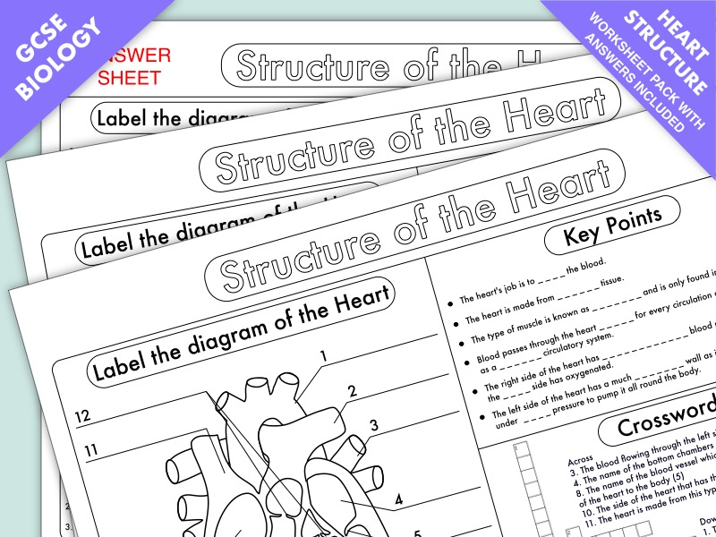 Gcse Biology Heart Structure Worksheet Pack By Beckystoke