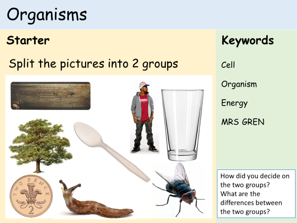 KS3 Cells - Lesson 1 - Organisms