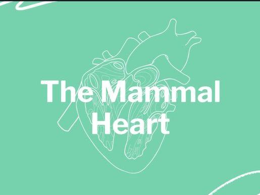 Mammal Heart Quick Facts PowerPoint