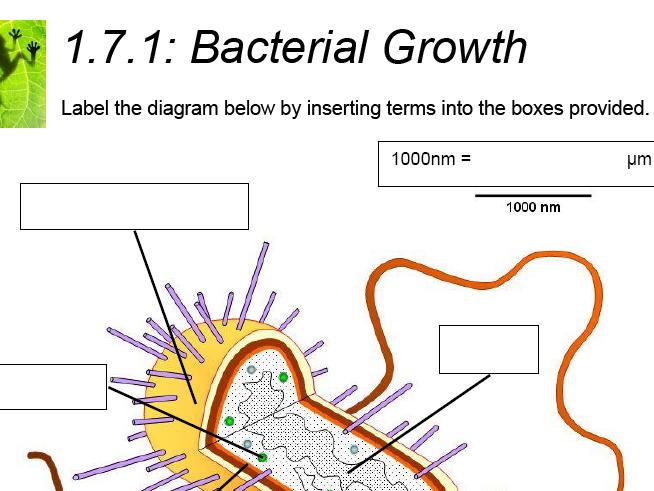 AQA GCSE Biology: Trilogy. Lesson 7 Culturing microorganisms
