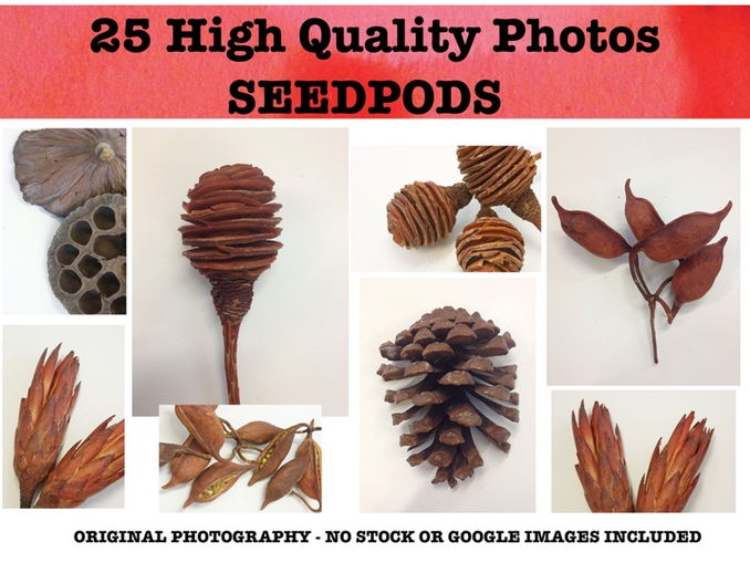 Seedpod - Photo resource pack
