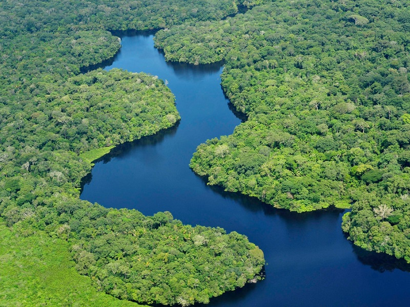 The Deforestation of the Amazon: A Case Study in ...
