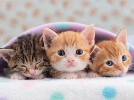 Kittens and Cats comprehension KS2