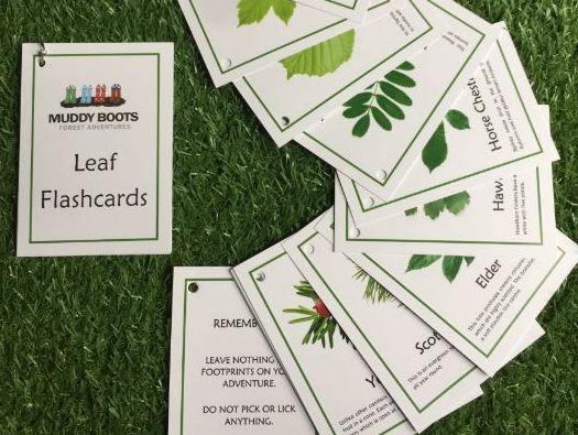 Leaf Flashcards