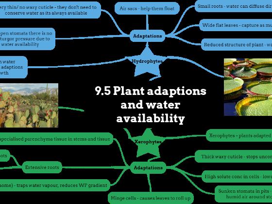 OCR A level Biology Plant Transport Mindmaps