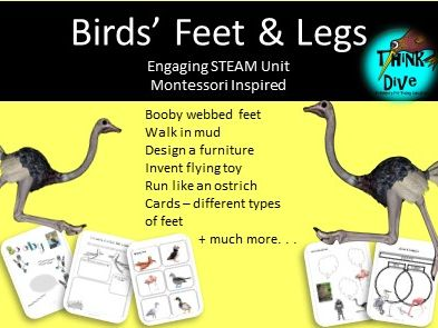 Project Based Learning: Birds' Feet & Legs, Montessori Inspired, Biomimicry, KS1, NGSS