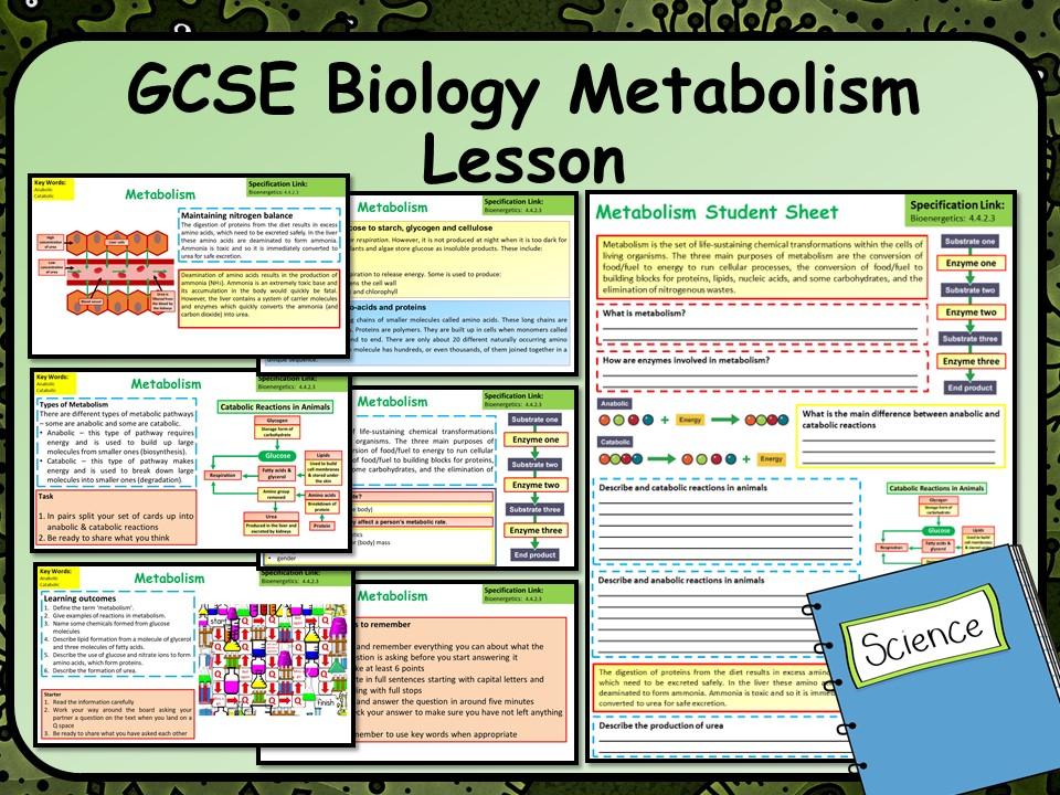 AQA KS4 GCSE Biology (Science) Metabolism Lesson