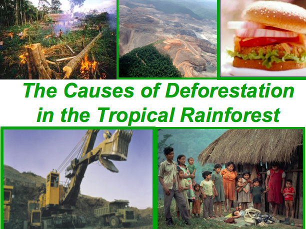 The Causes of Deforestation? Tropical Rainforest, Ecosystems
