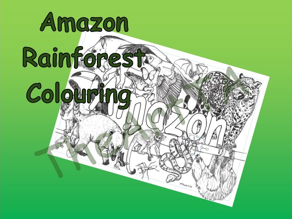 Rainforest Animals Colouring Sheet