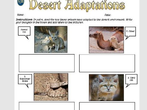 Africa SOW Lesson Nineteen: Animal Adaptations (Discounted Price)