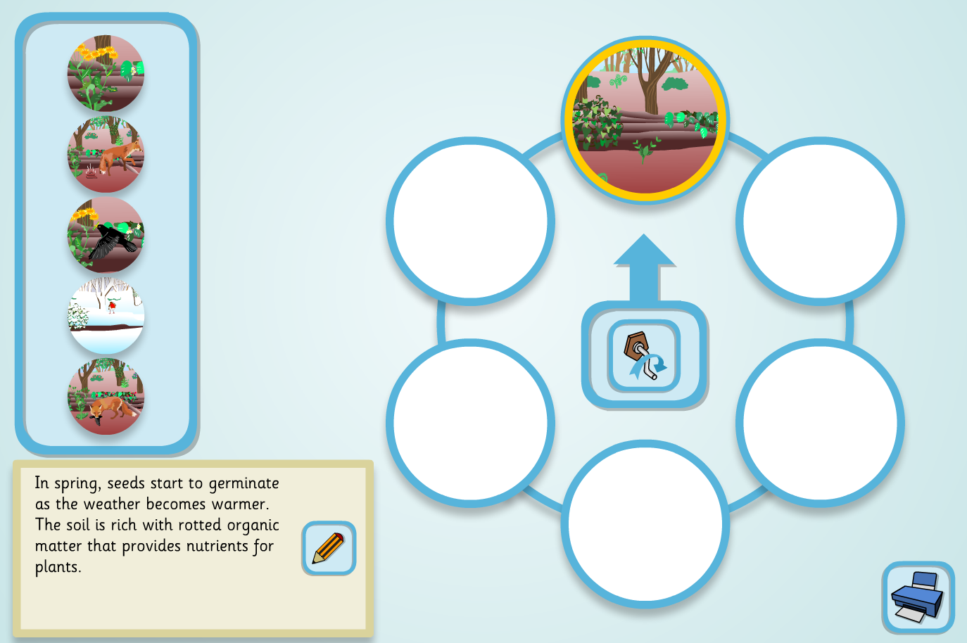 Woodland Food Cycle Sequencer (Complex) - KS2 Literacy