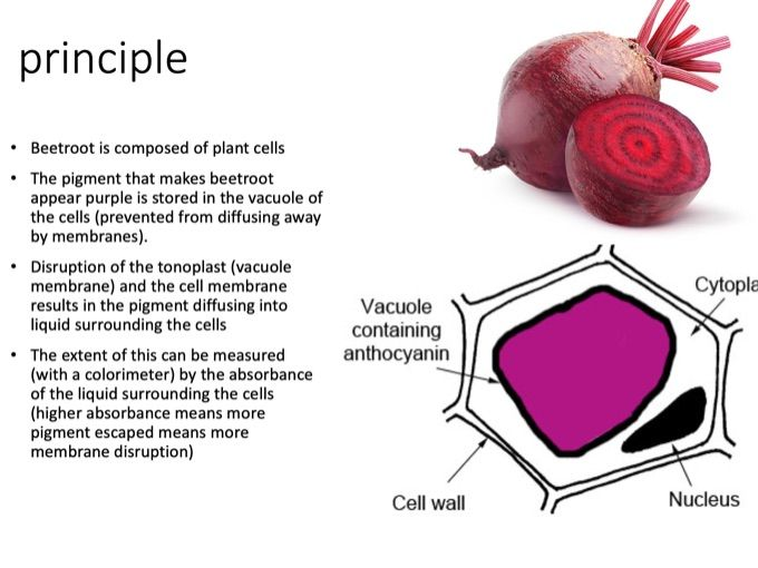 Edexcel Biology A core practical revision