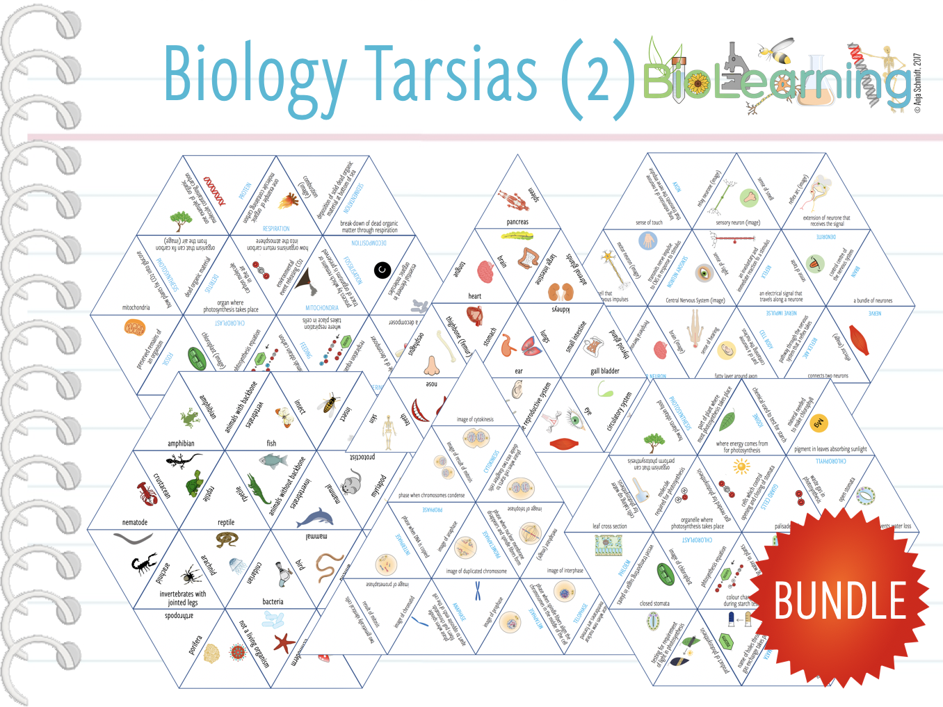 10x MORE Biology Tarsia Games  - Bundle (2) - (KS3/4)
