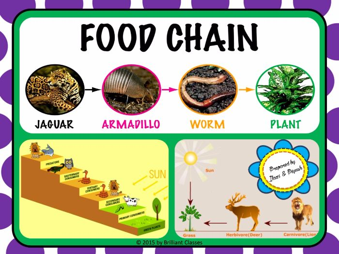 Food Chain - Unit Plan with Worksheets