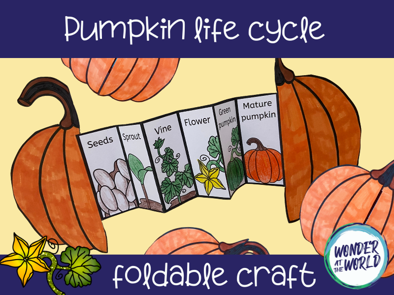 Life cycle of a pumpkin foldable craft