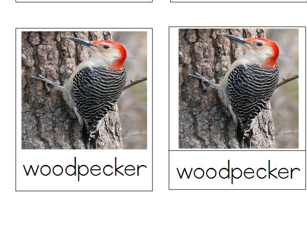 Birds Montessori 3-Part Cards