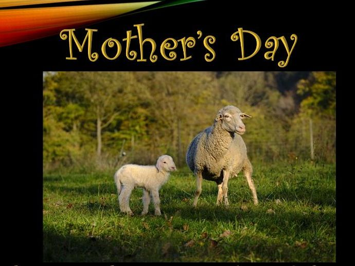 EYFS/KS1:  12 images of animals and young to celebrate Mother's Day