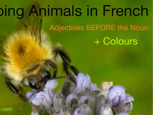 Animals in French + Adjectives