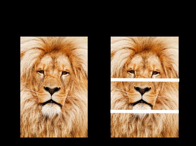 Animal Photo Puzzles