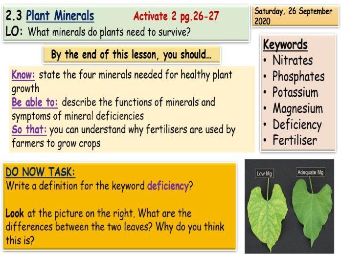 Plant Minerals KS3 Science