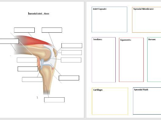 Synovial Joint Worksheets