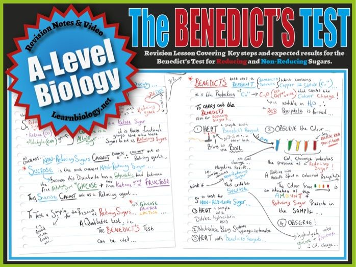 A Level Biology Benedict's Test - A-Level Biology Revision Notes and worksheet.
