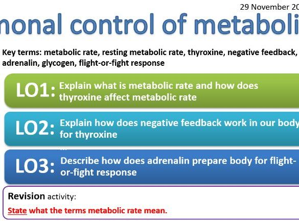 EDEXCEL CB7b Hormonal control of metabolic rate