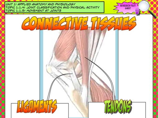 NEW GCSE PE – Unit 1 – Topic 1 – Lesson 3 - Joint Classification and Movement - Connective Tissues