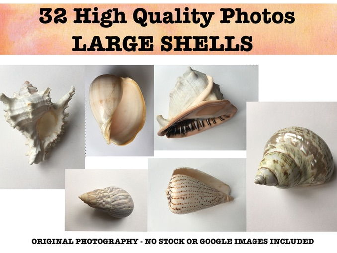 Large Shells - Photo resource bank