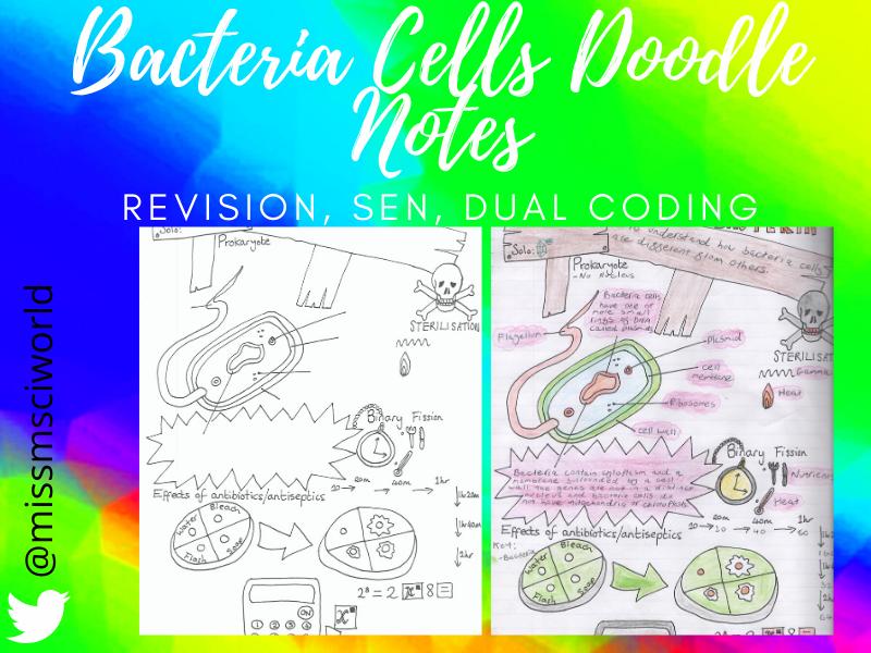 Bacteria Cells Science Doodle Note (Prokaryotic cells)