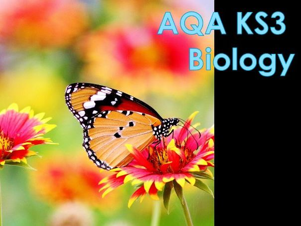 AQA KS3 Feeding relationships Lesson 3 - Food chains and Webs