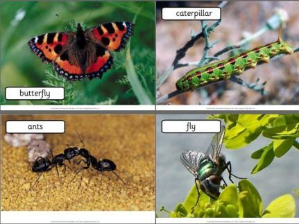 Free Minibeasts, Bug photos Display